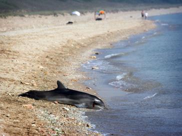 Дельфины совершили самоубийство