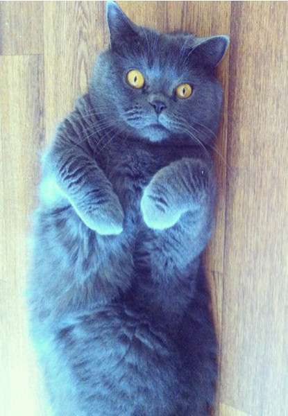 котики, кошки
