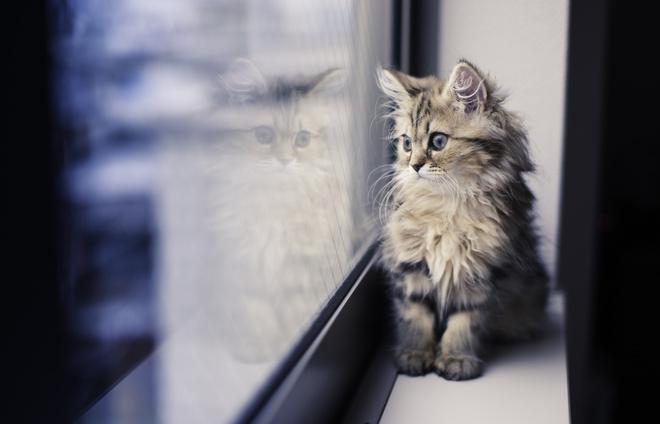 Прививки коту сроки