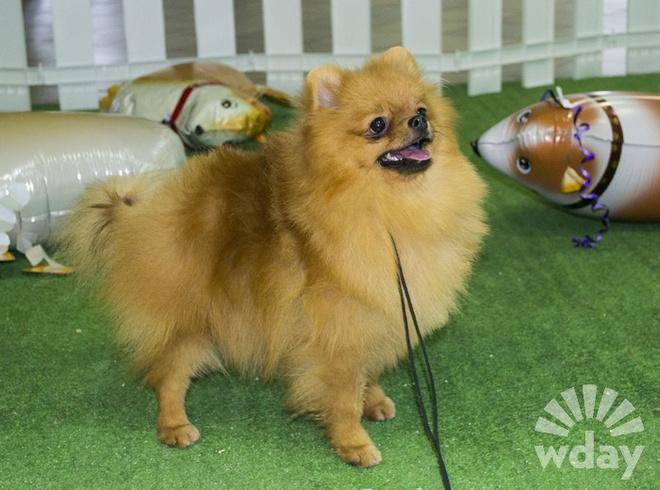 Породистые собаки фото
