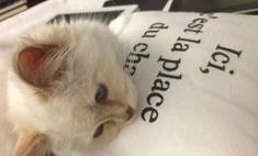 Карл Лагерфельд назвал сумку в честь кошки