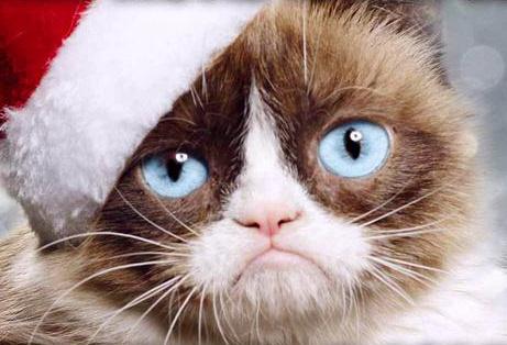 Угрюмый кот (Grumpy Cat) фото