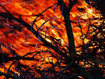 В Израиле полыхают самые страшные пожары