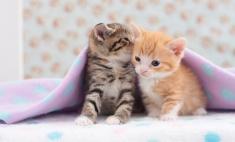 В Перми можно взять напрокат зонтик и котенка