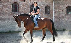 Где в Рязани покататься на лошадях?