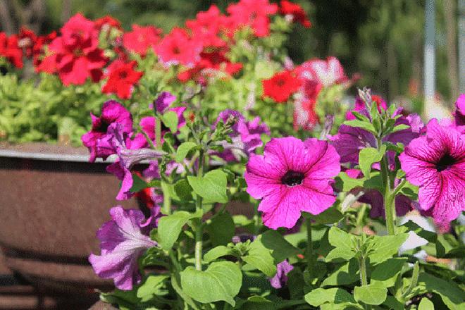 фестиваль цветов Самара