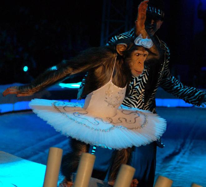 В Сочи цирк «Джамбо»