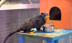 Топ-30 забавных животных тюменского зоопарка