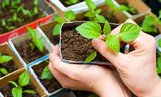 Старт сезона: выставки-ярмарки для садоводов в Петербурге