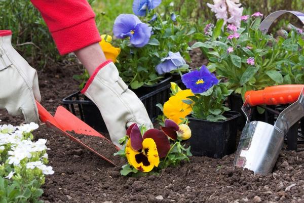 Как сажать цветы