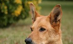 Собаку из Портленда номинировали на премию за спасение хозяина