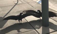 объяснение видео котором грифы неподвижно тротуаре распахнутыми крыльями