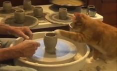Кот помогает человеку работать на гончарном круге (видео)