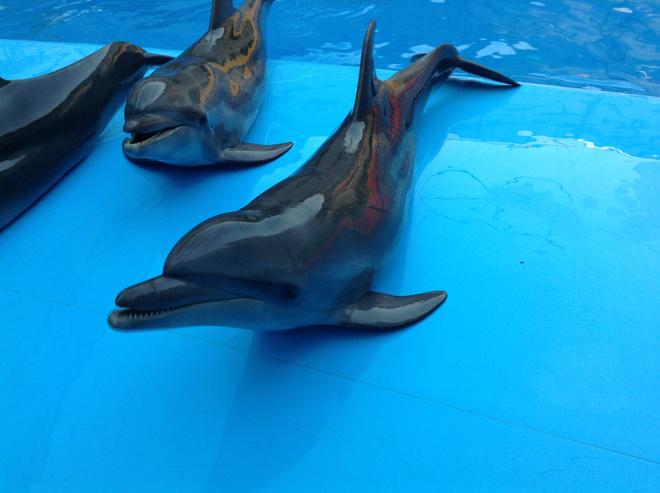 Дельфинотерапия