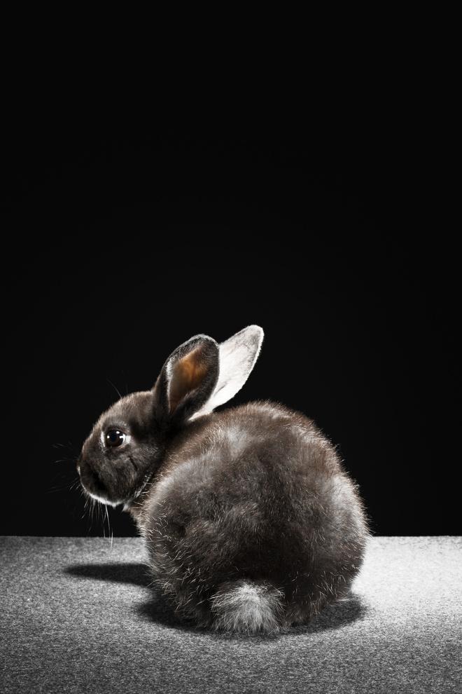 шишки у кроликов