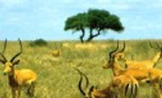 Дикая природа Кении дорожает