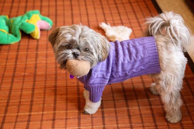 Как сшить одежду для собак?