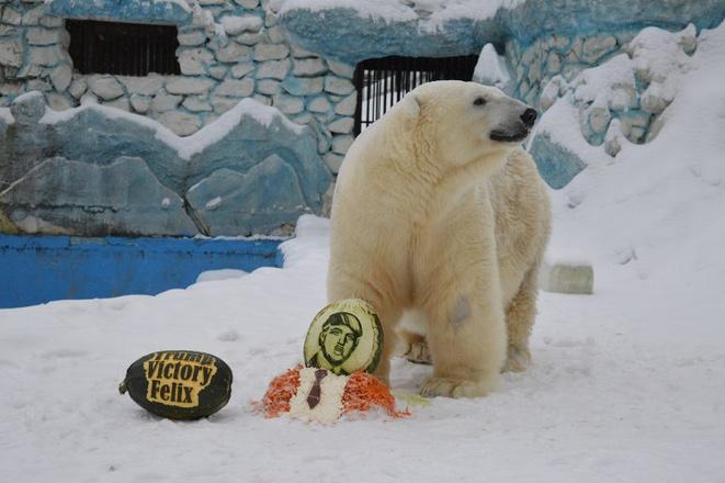 Медведь Феликс предсказал итоги выборов в США