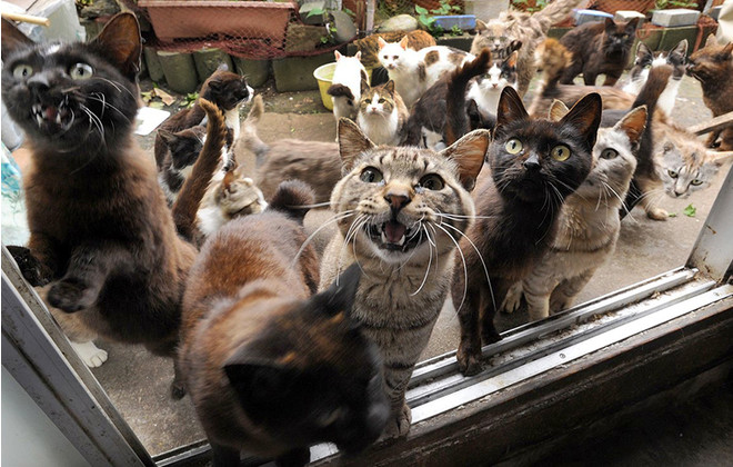 Картинки по запросу котики во дворе