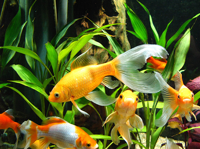 фото растений для аквариума