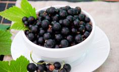 Черная смородина: 10 лучших рецептов