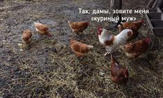 лучшие шутки рамзана кадырова объявил чечне петухов