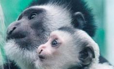 Зимовье зверят: малыши в Пермском зоопарке