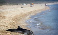 В Новой Зеландии более 70 дельфинов выбросились на берег