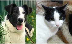 Котопёс недели: кот Ришар и пес Бим ищут своих людей