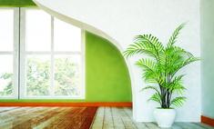 Разновидности комнатных пальм – домашние тропики