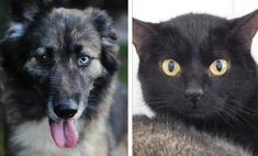 котопёс недели космический кот плутон собака цера разноцветными