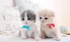 Пушистик года: 50 самых очаровательных котиков Самары