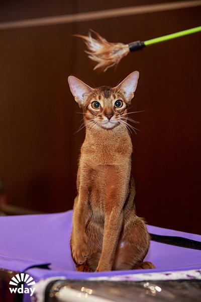 Выставка кошек в ростове на дону 2015 5-6 сентября