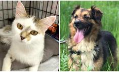 Котопёс недели: ласковая кошка Шарлотта и благовоспитанный пёс Рябчик ищут дом