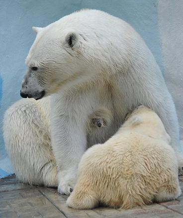 Медвежонок в новосибирском зоопарке