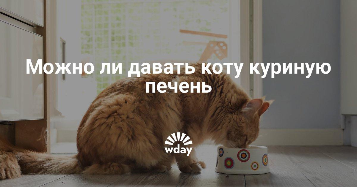 Можно ли давать котенку куриную печень
