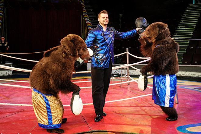 Цирк Филатовых в Воронеже