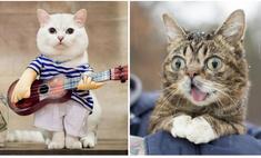 5 котов, у которых больше миллиона подписчиков в «Инстаграме»