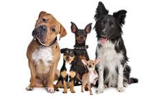 Топ самых очаровательных и необычных собак Барнаула