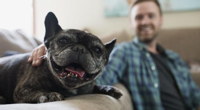 10 жизненных уроков от вашей… собаки