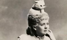 викторианские шляпы чучел животных фото
