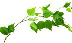 Советы и рекомендации: как правильно хранить веники для бани?