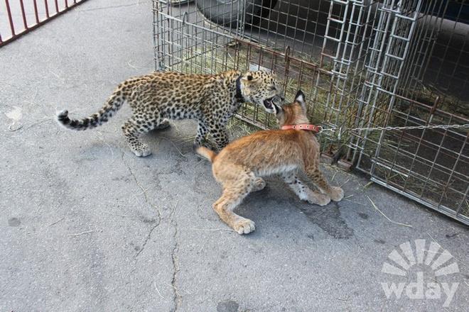 звери зоопарка