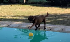 пёс поиграть мячом бассейна промокнуть видео
