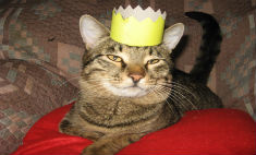 35 милых котов Астрахани: выбери самого классного!