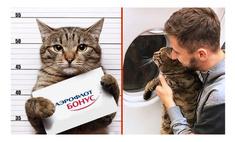 мемы упитанного кота виктора аэрофлот