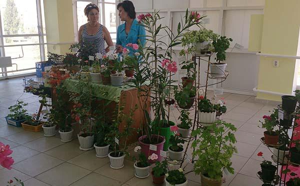 В Тольятти пройдет выставка-продажа цветов, комнатные растения