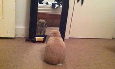 животных котов открыли зеркало