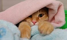 Котомания: 15 милых котиков и кошечек Самары. Голосуй!