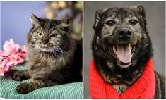 котопёс недели кошка грета собака рябушка